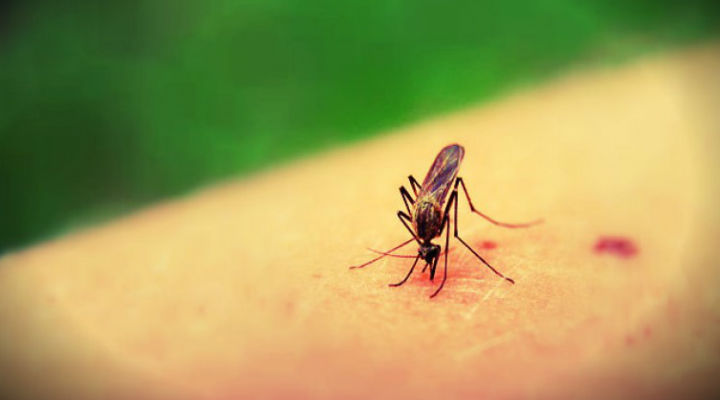 6 Safe and Effective ways to Prevent Mosquito Bites